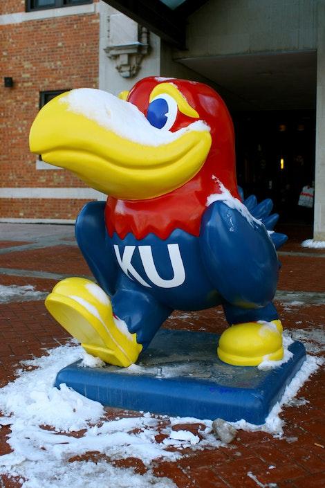 The KU Jayhawks