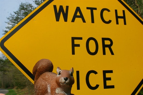 Watch For Rice