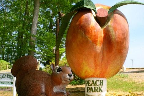 Rice at Peach Park