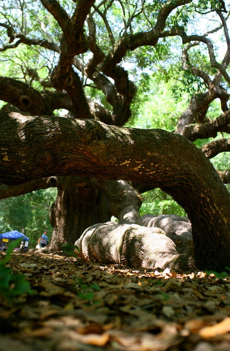 Angel Oak Branch