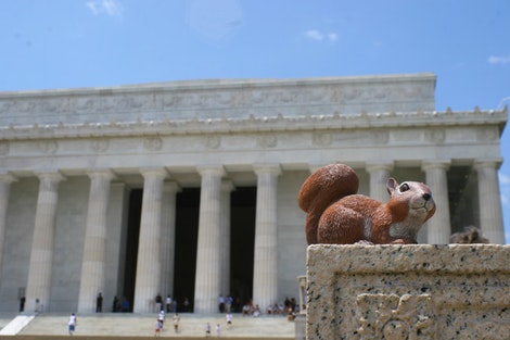 Rice at the Lincoln Memorial