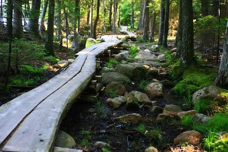 Acadia National Walkway