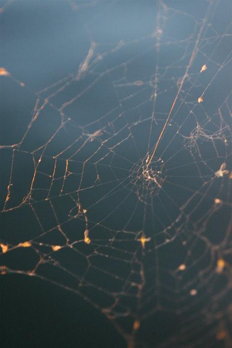 Spider of Champlain