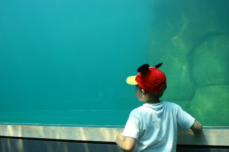 Christian Checking out fish