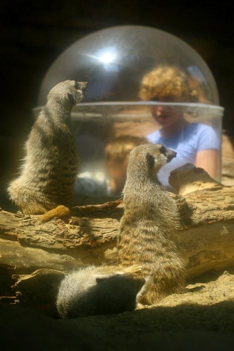 Meerkat Planet