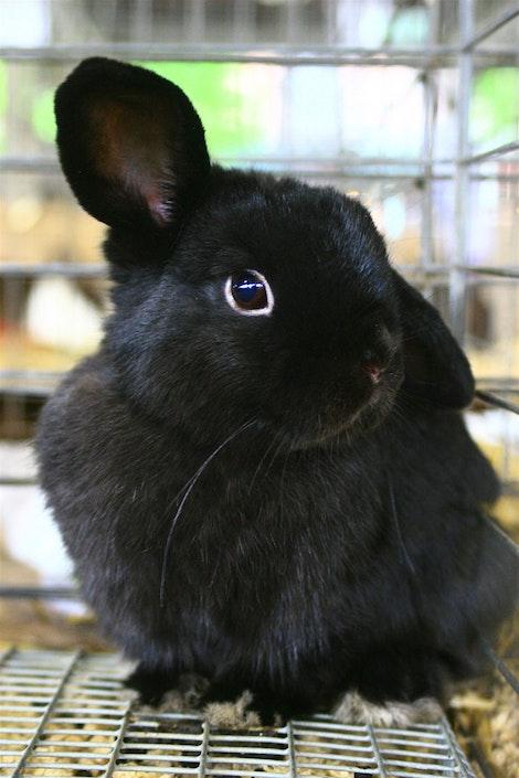 Favorite Bunny Ever
