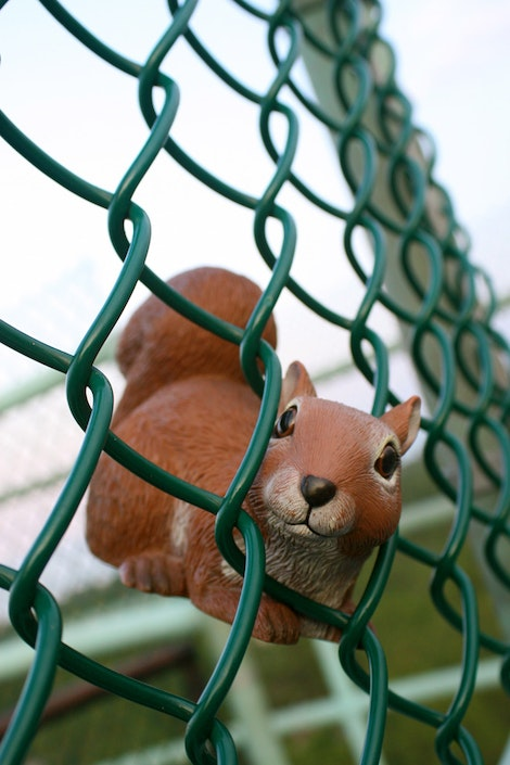 Caught in the Fence