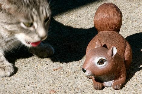 Mmmm Squirrel