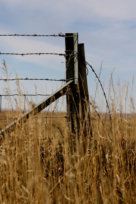 My Love for Fences