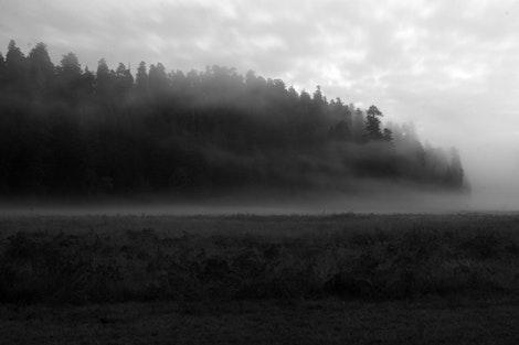 Prairie Creek Redwoods State Park #2