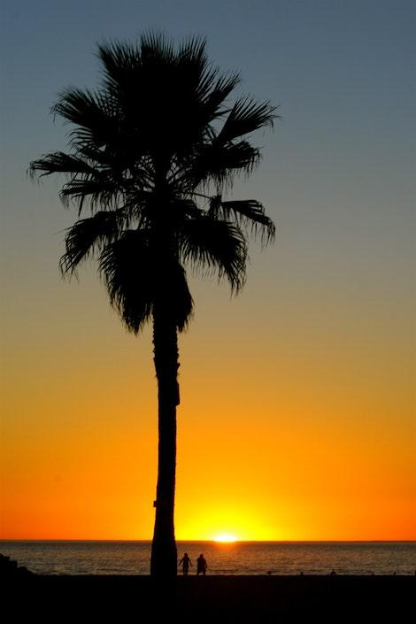 Venice Beach Palmset